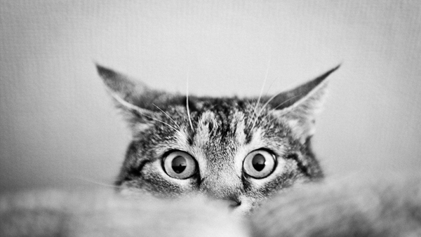 7248c813f580 Το Εμβόλιο της Λοιμώδους Ρινοτραχειίτιδας της Γάτας