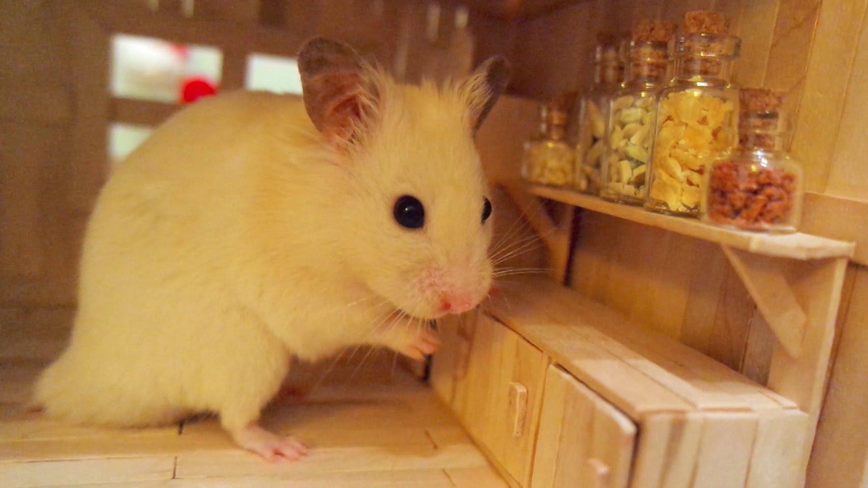 Hamster Pon