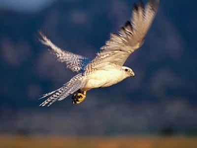 Μεγάλα ζουμερά χείλη πιπίλισμα πουλί