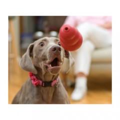 5 Τρόποι Άθλησης για το Σκύλο σας το Χειμώνα