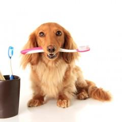 Οδοντική Φροντίδα και Στοματική Υγιεινή για Σκύλους