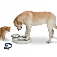Παχυσαρκία: Ένας Μεγάλος Εχθρός για Σκύλους και Γάτες