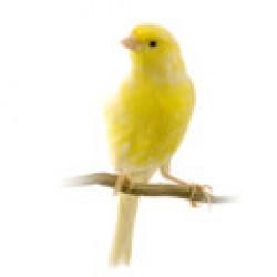 Αξεσουάρ για Πτηνά