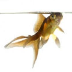 Προϊόντα για Ψάρια