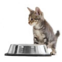 Λιχουδιές και Σνακς για Γάτες