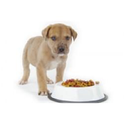 Λιχουδιές και Σνακς για Σκύλους