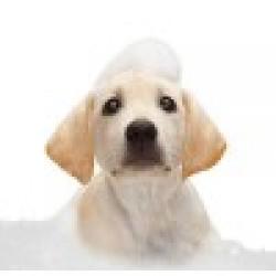 Προϊόντα Περιποίησης, Καλλωπισμού & Υγιεινής για Σκύλους