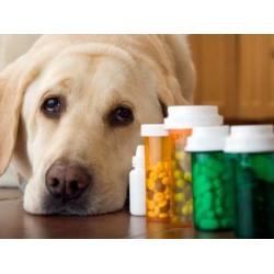 Παραφαρμακευτικά Προϊόντα για Σκύλους