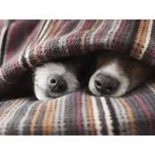 Χαλάκια - Κουβέρτες (6)