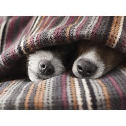Χαλάκια - Κουβέρτες